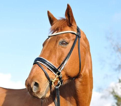BridlePath equestrian stock sale