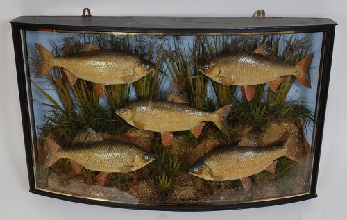 Lot 1638-Attributed to Cooper an Edwardian taxidermy group ...