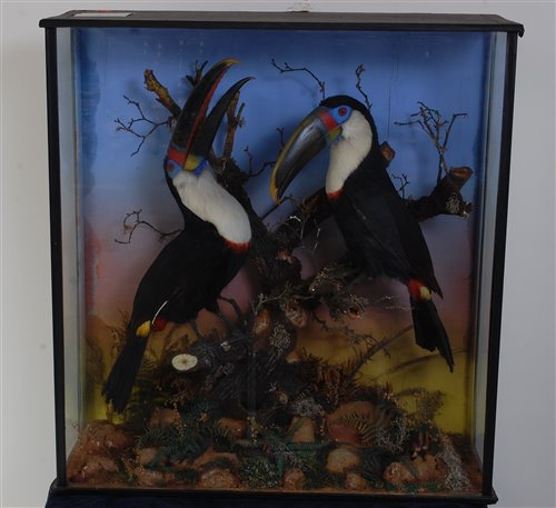 Lot 552-A pair of early 20th century taxidermy toucans...
