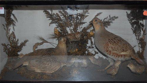 Lot 14-A taxidermy display of game-birds with chicks, in ...
