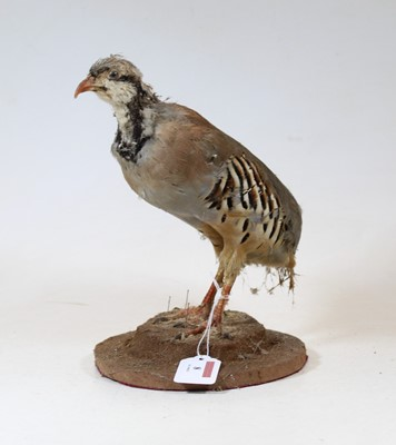 Lot 8 - A 20th century taxidermy bird on circular...