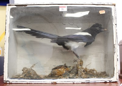 Lot 16 - A 20th century taxidermy magpie and kingfisher,...